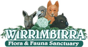 Wirrimbirra Sanctuary - Yamba Accommodation