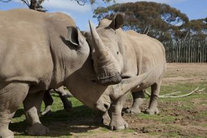 Monarto Zoo - Yamba Accommodation