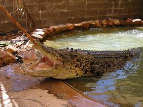 Wyndham Zoological Gardens and Crocodile Park - Yamba Accommodation
