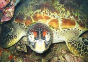 Adrenalin Snorkel and Dive - Yamba Accommodation